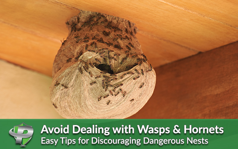 Pest Protection Plus :: Avoid Having to Deal with Wasps & Hornets This Summer